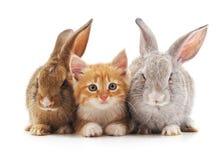 Rote Katze und Kaninchen Stockbild