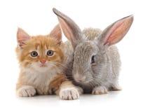 Rote Katze und Kaninchen Lizenzfreies Stockbild