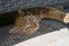 Rote Katze unter Stuhl lizenzfreies stockfoto