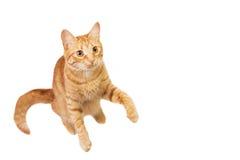 Rote Katze wird auf Weiß lokalisiert Lizenzfreies Stockfoto