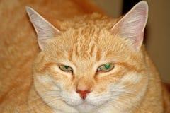 Rote Katzennahaufnahme der Schnauze Stockbild