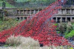 Rote keramische Mohnblumen Stockbild