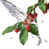 Rote Kirsche mit Blättern und Wasserspritzen Stockbild
