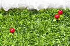 Rote Kirschen auf grünem Gras. stockfotografie
