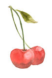 Rote Kirschen tragen auf Weiß, Aquarellmalerei Früchte Stockbilder
