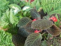 Rote kleine Blume Stockfotos