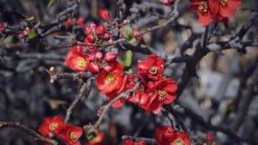Rote kleine Blumen auf den Baumasten Lizenzfreies Stockbild