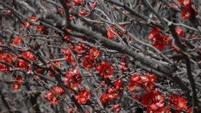 Rote kleine Blumen auf den Baumasten Lizenzfreie Stockbilder