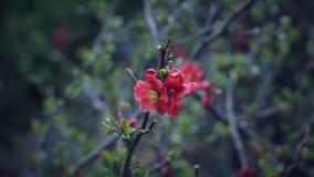 Rote kleine Blumen auf den Baumasten Stockfotos