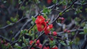 Rote kleine Blumen auf den Baumasten Lizenzfreie Stockfotografie