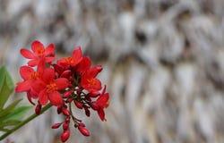 Rote kleine Blumen auf Hintergrund Stockfoto