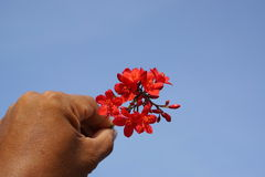 Rote kleine Blumen auf Hintergrund Stockfotografie
