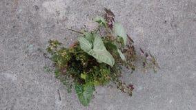 Rote kleine Buntlippe und Philodendron Lizenzfreie Stockfotografie