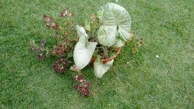 Rote kleine Buntlippe und Philodendron Lizenzfreies Stockbild