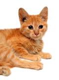Rote kleine Katze Lizenzfreie Stockbilder