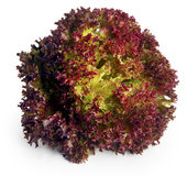 Rote Kopfsalat Blätter Stockfoto