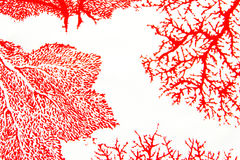 Rote Koralle Lizenzfreie Stockbilder