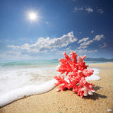 Rote Koralle mit Welle auf Strand stockfotos
