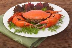 Rote Krabbe auf einer Platte Stockbild