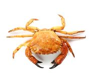 Rote Krabbe der Meeresfrüchte auf einem weißen Hintergrund Lizenzfreies Stockfoto