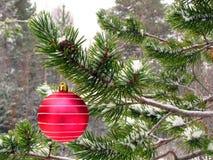 Rote Kugel auf Baum Lizenzfreie Stockbilder