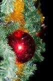Rote Kugel auf dem Weihnachtsbaum Stockbilder