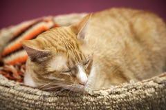Rote kurzhaarige Katze schläft mit Bequemlichkeit lizenzfreie stockbilder