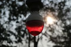 rote Lamm-Unschärfe lizenzfreies stockfoto
