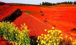 Rote Landschaftfelder Lizenzfreie Stockfotografie