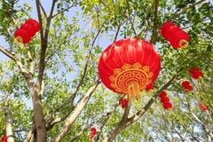 Rote Laterne, die am Baum, luftgetrockneter Ziegelstein rgb hängt Lizenzfreies Stockbild