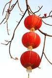 Rote Laternen und Kapok Stockfoto