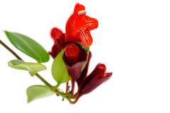 Rote Lippenstift-Blume Aeschynanthus-radicans Stockbilder