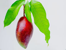 Rote Mango-Kaiser lizenzfreie stockfotos