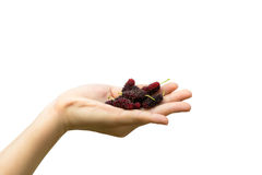 Rote Maulbeere in den Händen der Frau stockbilder