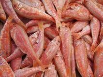 Rote Meeräsche Lizenzfreies Stockfoto