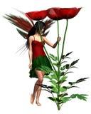 Rote Mohnblume-Fee Stockbilder