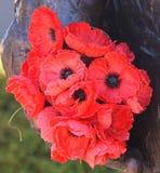 Rote Mohnblume ist ein Symbol der Kriegserinnerung geworden lizenzfreies stockbild