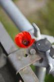 Rote Mohnblume wächst durch Metall Lizenzfreie Stockfotos
