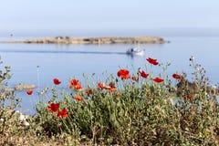 Rote Mohnblumen auf dem Hintergrund des Meeres lizenzfreie stockfotos