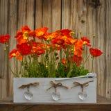 Rote Mohnblumen auf dem Holz Lizenzfreie Stockfotos
