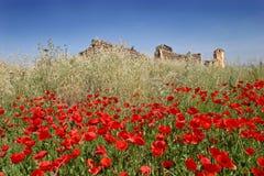 Rote Mohnblumen auf einem sonnigen Gebiet mit blauem Himmel Stockfotografie