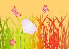 Rote Mohnblumen auf einer Wiese Lizenzfreies Stockbild