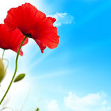 Rote Mohnblumen, blauer Himmel Stockfoto