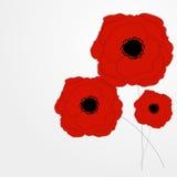 Rote Mohnblumen-Blumen-Hintergrund-Vektor-Illustration Stockbilder