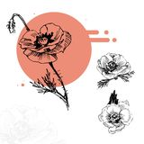 Rote Mohnblumen der Skizze im Kreis lizenzfreie stockfotos