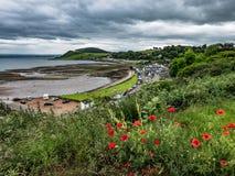 Rote Mohnblumen, die auf Abhang über Avoch, Schottland blühen lizenzfreie stockfotografie