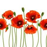 Rote Mohnblumen in Folge. Stockbilder