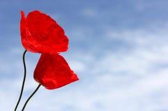 Rote Mohnblumen gegen den blauen Himmel Lizenzfreies Stockfoto
