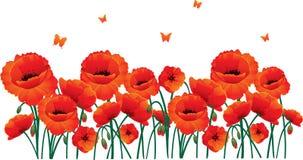 Rote Mohnblumen ziehen sich zurück Stockfotografie