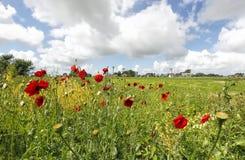 Rote Mohnblumenblumen, blauer Himmel und Windmühle stockfotos